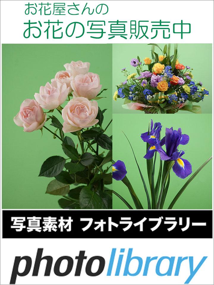 お花の写真素材販売中!